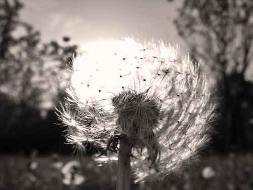 Счастье полевого мотылька